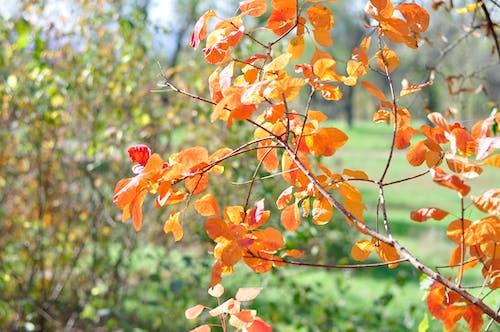 Darmowe zdjęcie z galerii z czerwony, jesienna ozdoba, las