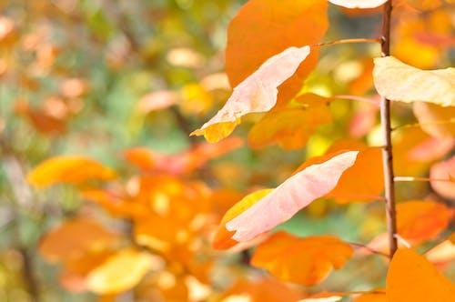 Darmowe zdjęcie z galerii z jesienna ozdoba, las, matka natura