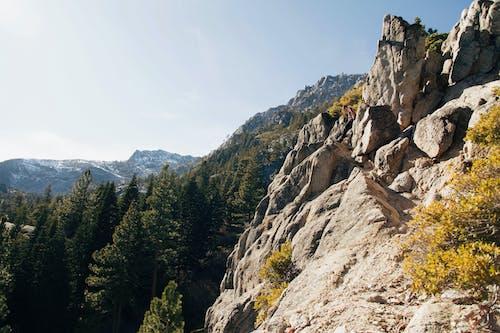Fotos de stock gratuitas de arboles, bosque, montaña, naturaleza