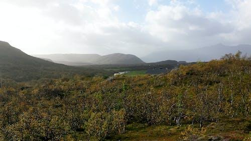 Gratis arkivbilde med busker, fjell, norge