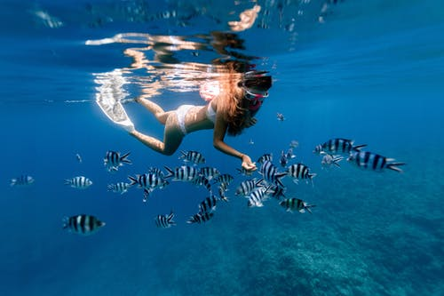Anonymous woman snorkeling in sea with Enoplosus armatus fishes