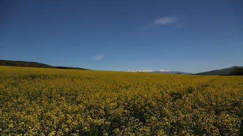Gratis stockfoto met blauw, blikveld, bloemen, bulgarije