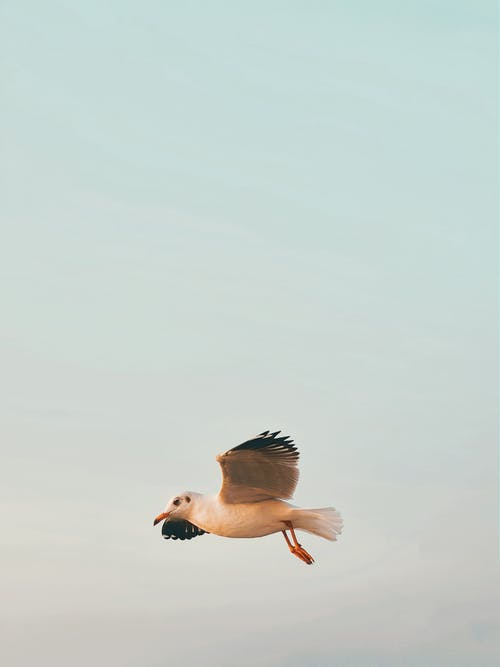 Seagull flying in cloudy sky