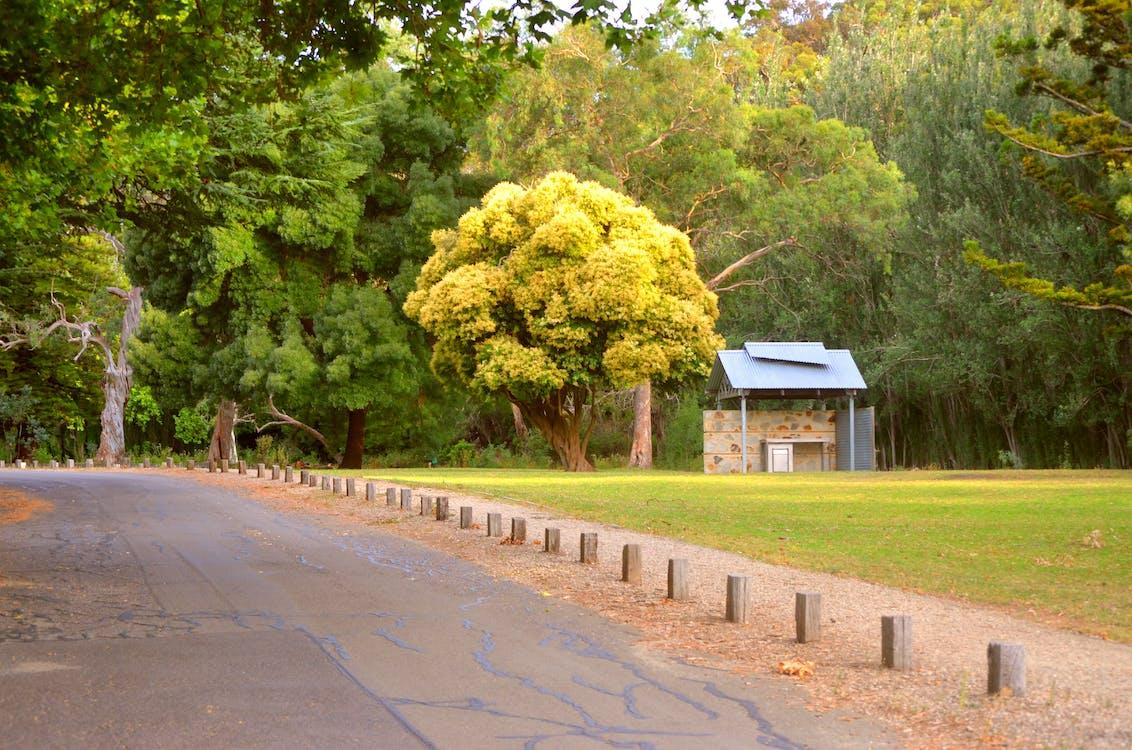 Photos gratuites de adélaïde, arbre, arbre jaune