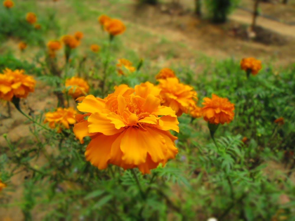 Free stock photo of beautiful flowers, nature
