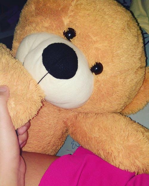 Free stock photo of brown bear, teddy
