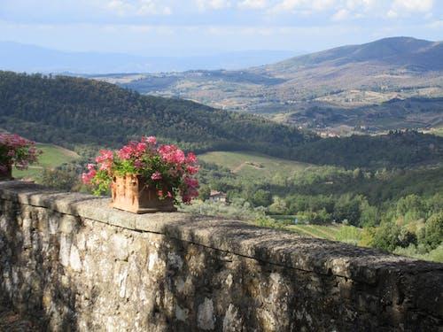 Free stock photo of chianti, tuscany, wedding