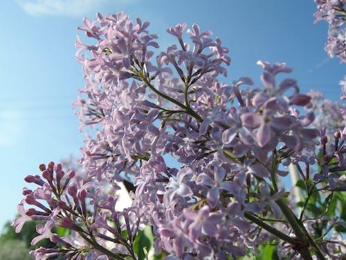 Kostnadsfri bild av blommor, blomning, färger, flora