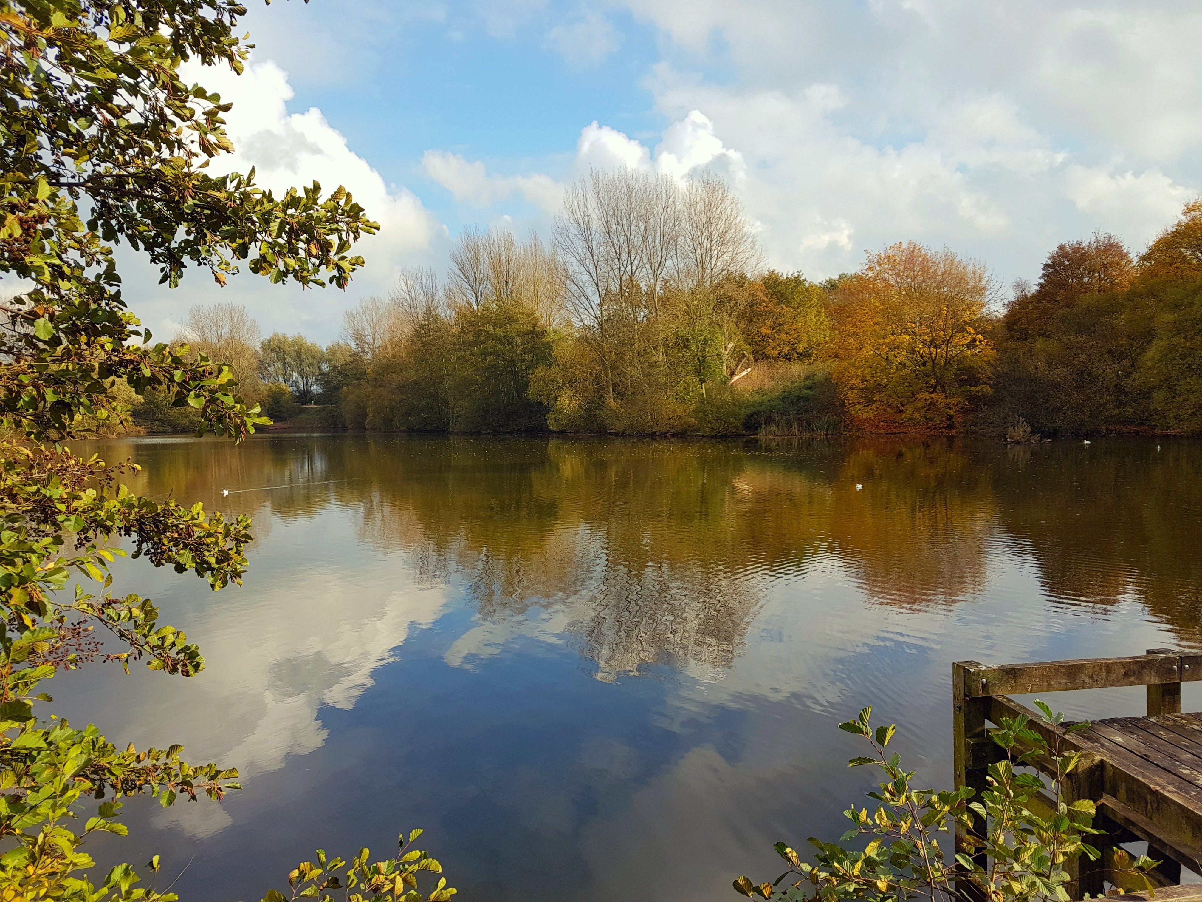 Free stock photo of autumn, autumn colours, autumn leaves, calm