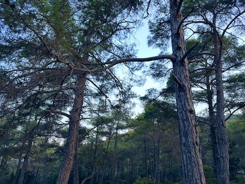 公園, 分支機構, 天性, 天空 的 免费素材照片