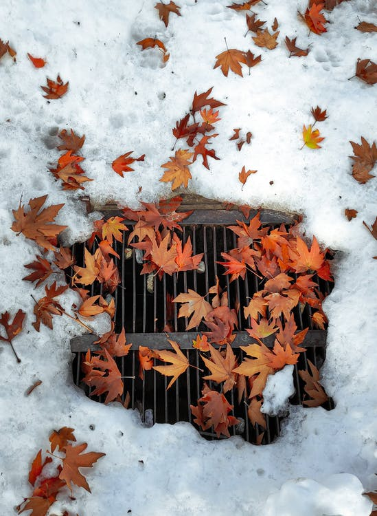 Fall Leaves On Top of a Drainage Near Snow
