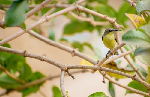 Free stock photo of beauty of nature, bird, bird eye