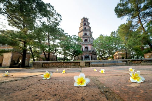 Ground level of fresh delicate magnolia flowers scattered on ground near ancient Pagoda of the Celestial Lady located in Hue city in Vietnam