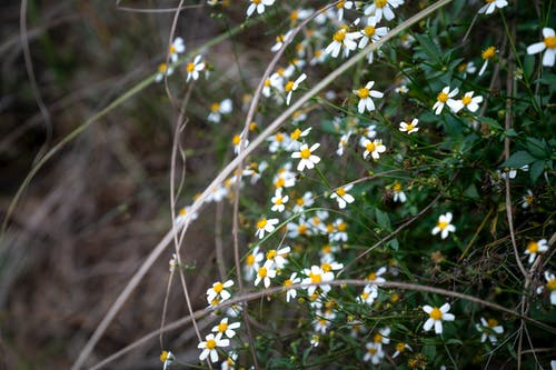 Blossoming white flowers with gentle petals and curved stalks growing in daytime on blurred background