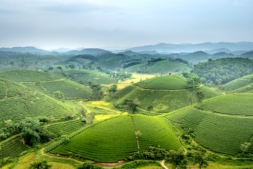 Tea fields on green hills in tropical countryside