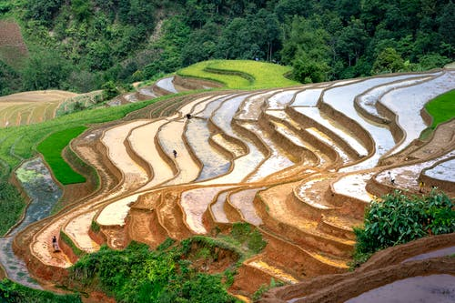 Rice plantations on hillside Asian farm