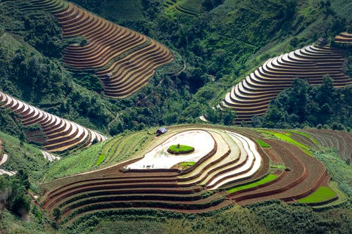 Aerial view of terrace farming for cultivating rice on hills in forested valley