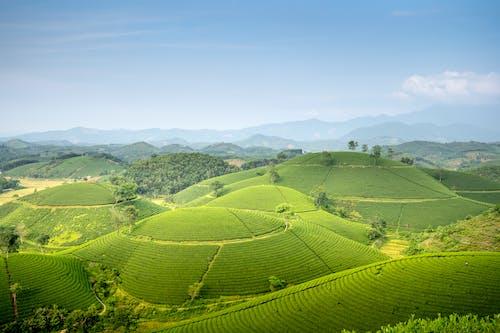 Foto profissional grátis de abundância, agricultura, agronomia