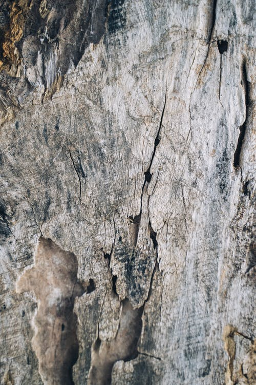 Dry tree trunk with dry cracked bark