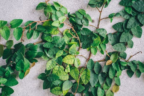 Green plant with lush leaves on rough background