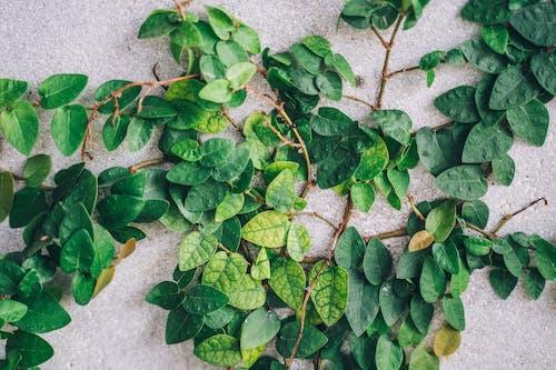 Immagine gratuita di agricoltura, asfalto, botanica