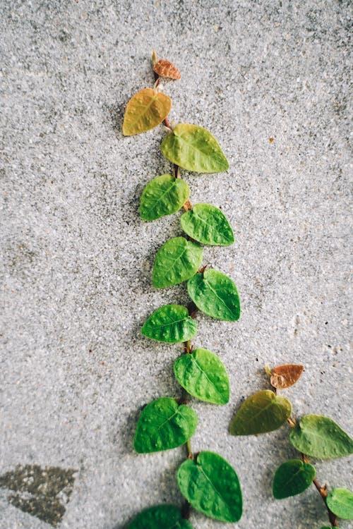 Green Leaves on Gray Concrete Floor