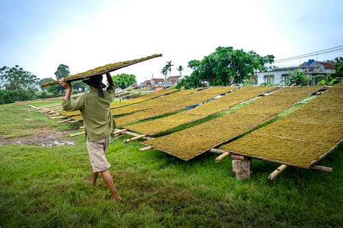Unrecognizable farmer carrying tray with green tea in countryside