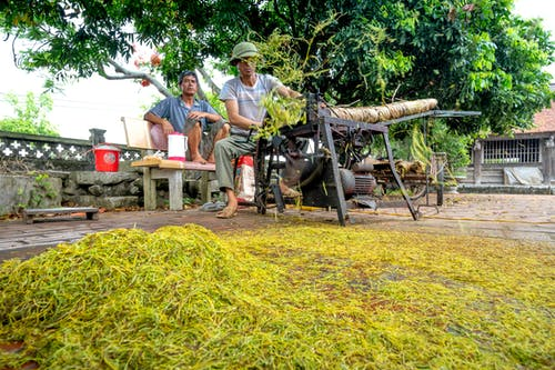Male workers working on press machine while sitting on street with heap of green leaves in countryside with residential building