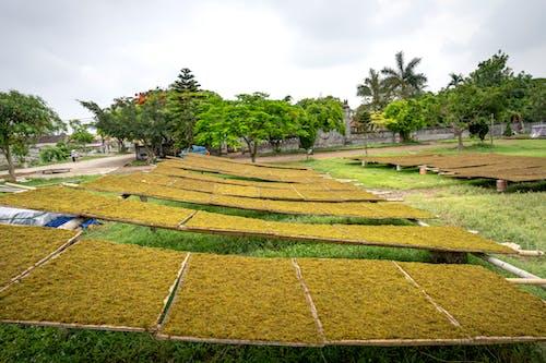 Foto profissional grátis de agricultura, agronomia, amplo