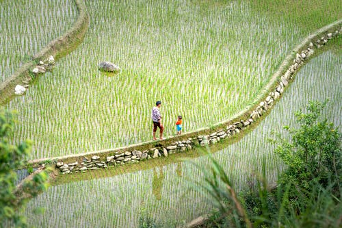 Side view of unrecognizable male standing with little boy on walkway among rice plantations in countryside in summer
