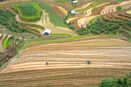 Gratis stockfoto met agrarisch, akkerland, boerderij