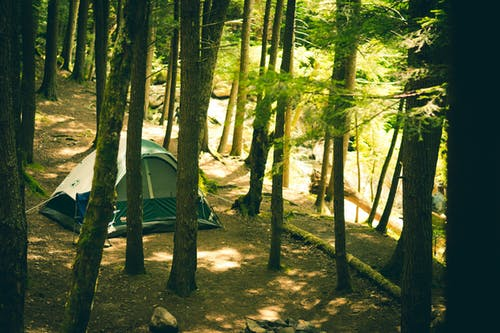 Gray Dome Tent Surrounded by Tall Trees