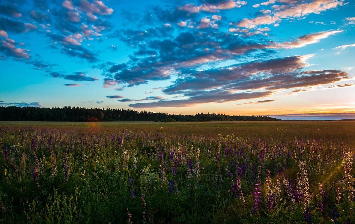 bane, blå himmel, blomster