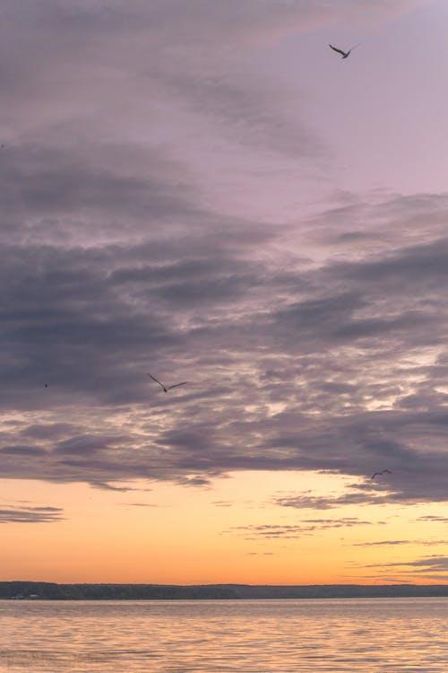 Ảnh lưu trữ miễn phí về bầu trời tím, biển, bình minh