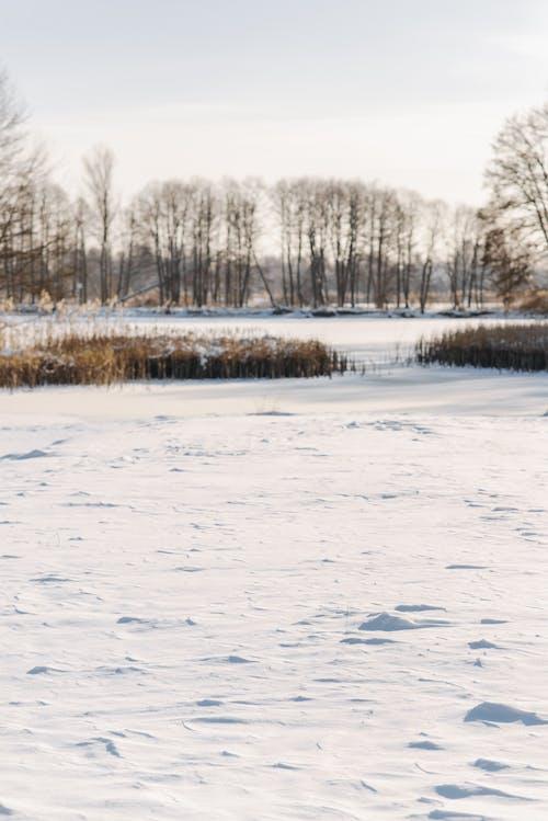 Imagine de stoc gratuită din acoperit de zăpadă, arbori, congelat