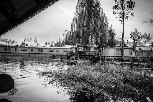 Gratis stockfoto met achtergrond, avond, bomen, dal lake
