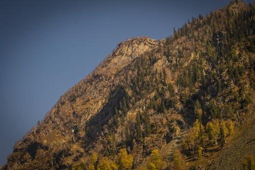 Gratis stockfoto met bergen, blauwe lucht, bomen, dennen
