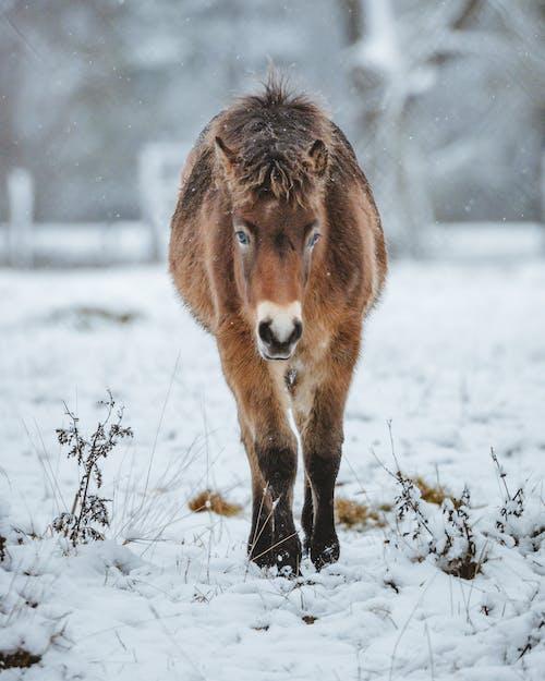 갈기, 감기, 겨울의 무료 스톡 사진