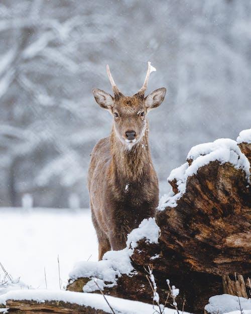 감기, 겨울, 공원의 무료 스톡 사진