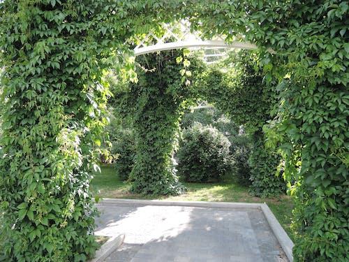 Ilmainen kuvapankkikuva tunnisteilla puisto, puutarha, vihreä