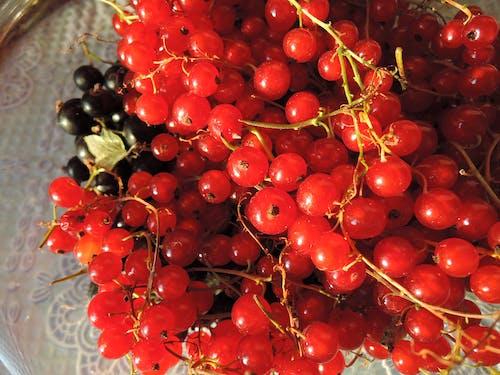 Ilmainen kuvapankkikuva tunnisteilla marjat, Punaherukka, punaiset marjat