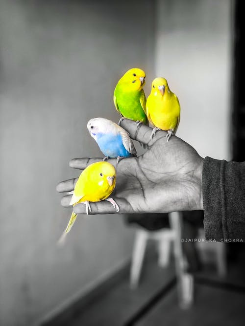 Free stock photo of birds