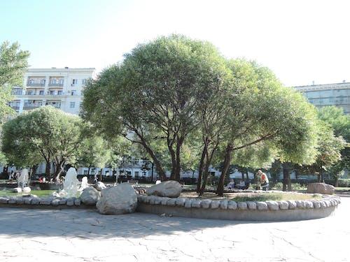 Ilmainen kuvapankkikuva tunnisteilla kesä, Moskova, puisto, puisto kaupungissa