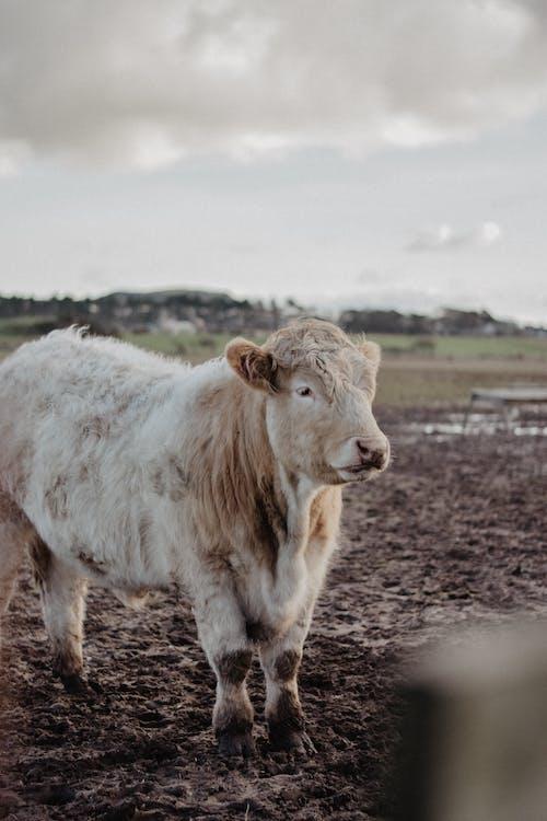 Foto profissional grátis de agricultura, animal, ao ar livre