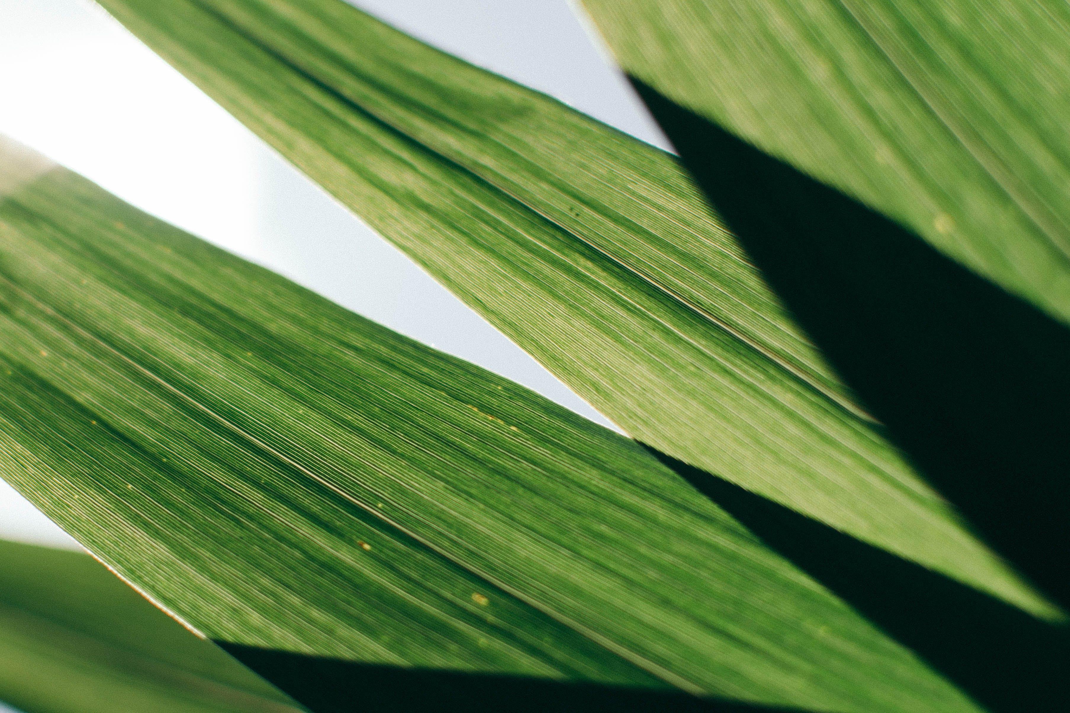 Kostenloses Stock Foto zu grün, nahansicht, pflanze, wachstum
