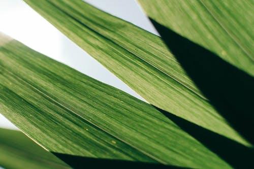 Gratis lagerfoto af close-up, grøn, plante, vækst