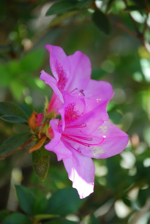Free stock photo of blossom tree, flower