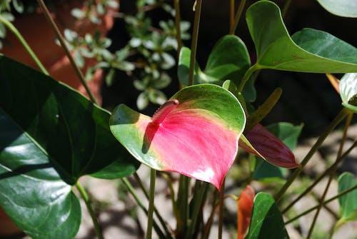 Free stock photo of flower, flowering tree