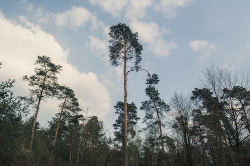 Photos gratuites de à feuilles persistantes, arbres, bois, environnement