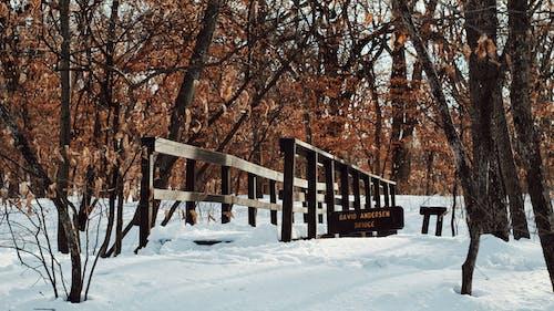 Free stock photo of adventurer, bridge, cold